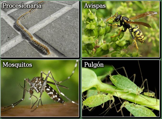 procesionaria, avispas, mosquitos, pulgon